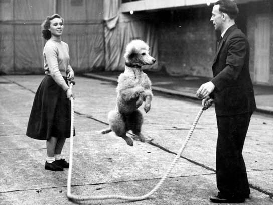 Dog jumping over a skipping rope.