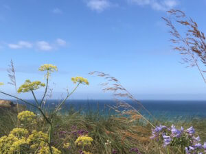 Ocean View helps wellbeing