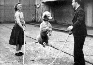 Dog Skipping Vintage pic