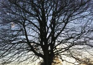 Tree in winter.